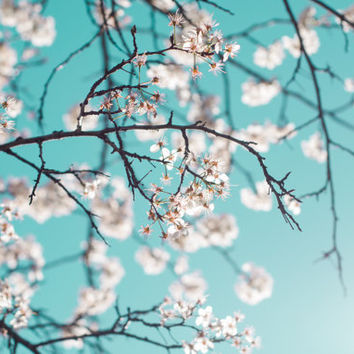 Flower Photography Fine Art Photo Flowering White Crabapple Tree Tiffany Blue Teal Sky Photograph Wall
