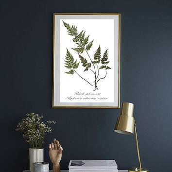 Fern Herbarium PRINT, Woodland Home Decor, Pressed Fern Art, Botanical Art, Real Plant Art, Pressed Plant Art, Botanical Decor, 8.5 x 11
