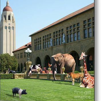 Life Down On The Farm Stanford University California Square V2 Dsc685 Metal Print