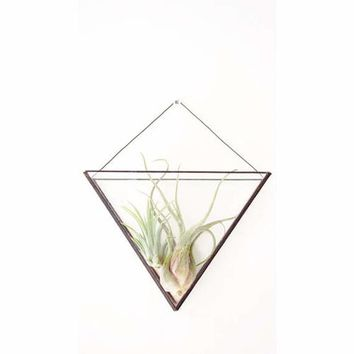 Geometric glass wall terrarium - Indoor wall