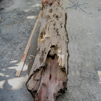 "53"" Petrified Wood Log, Jurassic Driftwood 145,000,000 years Old, Agatized Wood RARE Museum Quality"