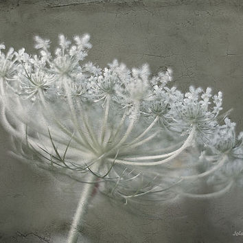 Nature photography wildflower photo print queen anne's lace photography 8x12 fine art print wall decor vintage home decor green gray