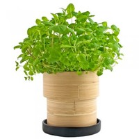 Bamboo Grow-Pot: Mint : Branch: Sustainable Design for Living