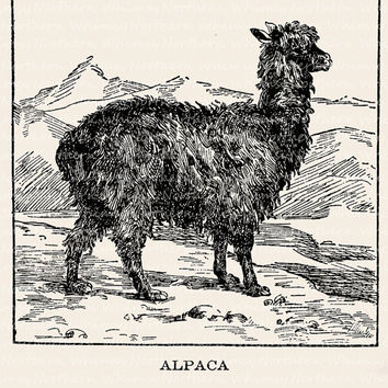 Alpaca Illustration - Vintage Animal Clip Art Image – Digital Stamp - Printable Transfer Graphic – instant download clipart - CU OK