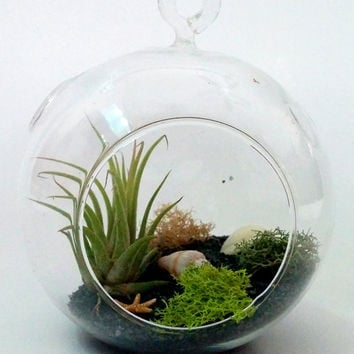 Complete DIY Air Plant Miniature Garden Round Hanging Glass Globe Terrarium Kit (choice between shells, bottles, starfish or mushrooms)