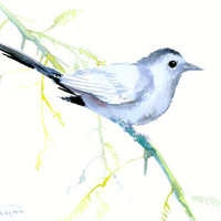 Gray Catbird painting original watercolor art 12 x 9 in gray olive green wall art minimalist bird lover painting