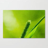 Hello, World! Canvas Print by Digital2real