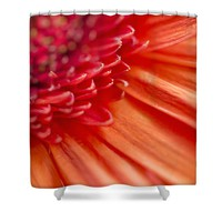 Brilliant Orange Gerbera Daisy Shower Curtain for Sale by Ivy Ho