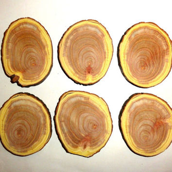 6 Pcs Wood slices, wood discs, wood blanks, wood centerpieces, rustic natural tree slices. Pyrography blanks, wood slices centerpieces