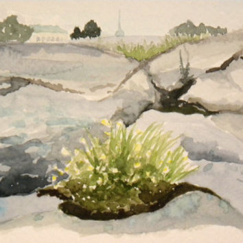 Summer flowers from a rocky shore of Helsinki. Original watercolor painting.
