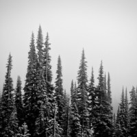 Winter Fog Art Print by Kurt Rahn