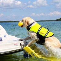 OUT OF STOCK  til July 13, 2018 Pawz Pet Products Dog Boat Ladder -Yellow