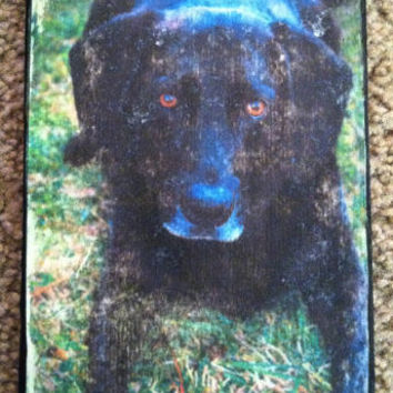5x7 Labrador Retriever Photograph (or photo of your choice) Transferred onto Wood - Worn Look