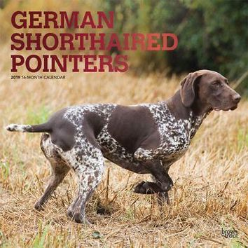German Shorthaired Pointers Wall Calendar, German Shorthaired Pointer by