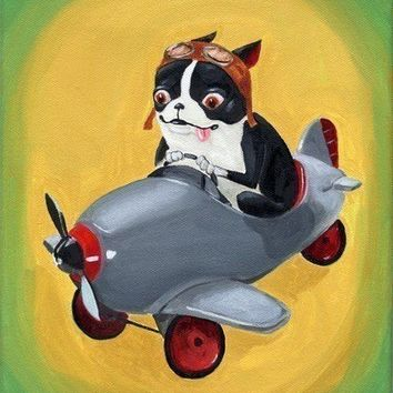 Boston terrier in a pedal plane print by rubenacker on Etsy