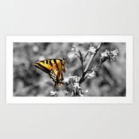 Butterfly Art Print by Derek Delacroix