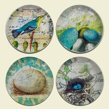 Magnets - Set of Four Bird Nests and Eggs Magnets in Gift Storage Tin with Clear Lid