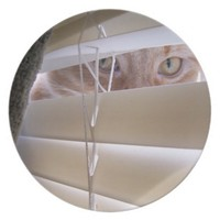 Cat in the Window Dinner Plate