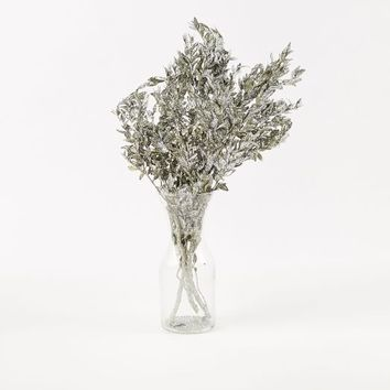 Dried Boxwood Branch - Silver