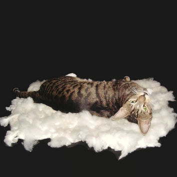 Cat Bed Cruelty Free Felted Wool Fleece Pet Bed - Cormo - Supporting US Small Farms - Ready to Ship