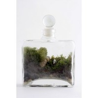 Twig Terrarium Tropisma Female Figure - Gifts Under $50 - Gifts - Category