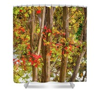 In The Trees Shower Curtain for Sale by Susan Eileen Evans