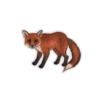 Red Fox Wildlife Magnet