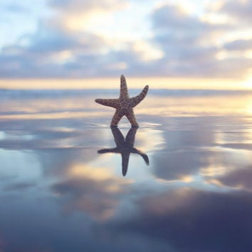 Starfish Beach Photography