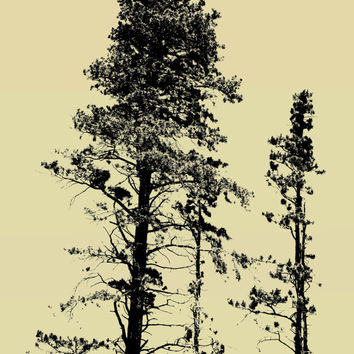 Retro Photography, Pine Tree Pictures Color Pop Splash Colorized Photograph, Rocky Mountain National Park Photo, Wall Poster Art Prints