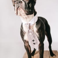 Grey Dog Tuxedo Neck Tie Collar with Diamante Studs