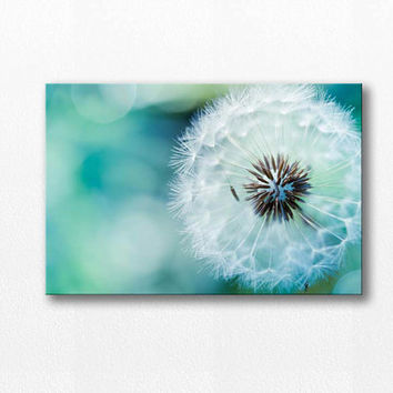 Dandelion photography canvas wrap 12x12 24x36 nature photography canvas print dandelion gallery wrap botanical fine art photography