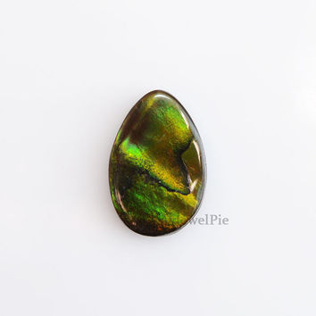 22.20 Cts.Natural and Rare Multi Color Ammolite loose Gemstone