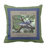 Blue Jay pillow, framed in green, taupe & blue Pillow