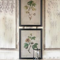 Cotton Botanical Prints
