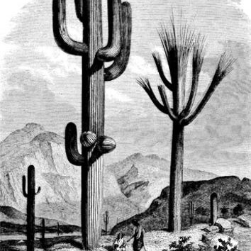 cactus desert landscape clip art png digital Download art graphics old west printables cards t shirts pins buttons etc