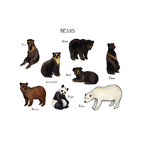 Bears of the World Field Guide Art Print