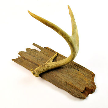 Antique Barn Wood, Deer Antler, Coat Rack, Wall Decor, Kentucky