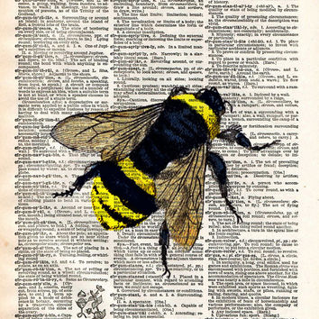 Bumblebee insect drawing, Bee art print,  dictionary page book art print