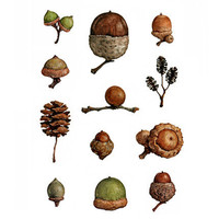 Acorns Watercolor Painting Print