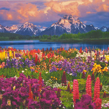 Grand Teton Mountain Wildflowers Poster 24x36