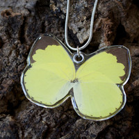 Little Grass Yellow Butterfly Necklace