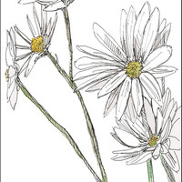 Fine art card giclee of daisy flowers 55x425 by amostroutstudio