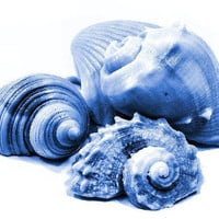 Sea Shell Soap - Decorative Gift Soap in Blue OOAK Set of 5
