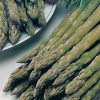 Asparagus, 'Connover's Colossal' Seeds £2.05 from Chiltern Seeds - Chiltern Seeds Secure Online Seed Catalogue and Shop
