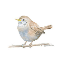 Wren Watercolor Painting - 11 x 14 - Giclee Reproduction - Bird Painting - Woodland Animal