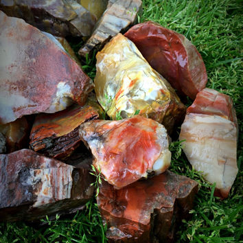 """1 One Very Colorful RAINBOW PETRIFIED WOOD Rough Mineral Display Stone ~ About 3"""" to 4"""" Crystal Healing Reiki Mineral"""