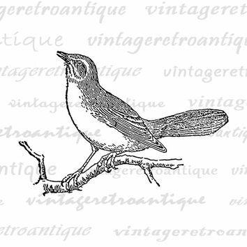 Printable Image Mockingbird Bird Download Digital Graphic Antique Clip Art Jpg Png Eps  HQ 300dpi No.3135