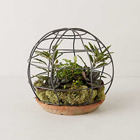 Anthropologie - Spherical Trellis Terrarium