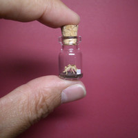Stegosaurus in a tiny bottle
