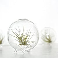 Air Plant in a Bubble / Air Plant Eco Globe, Glass Eco Orb Terrarium, Clear Blown Glass Globe Vase, Air Plant in Glass Ball Vase, Eco Sphere